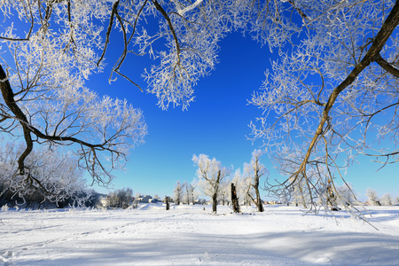 rural landscapes: winter landscape frost oaks in sunny frosty morning Stock Photo