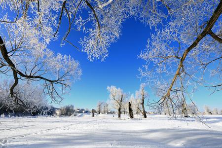 landschaft: Winterlandschaft Frost Eichen im sonnigen frostigen Morgen