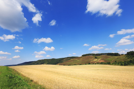 open spaces: summer landscape beauty of the fields and open spaces at the end of the summer on a sunny day