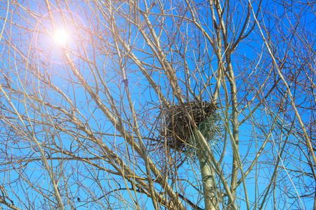 disordered: close-up of a birds nest on the branches without leaves against the blue sky