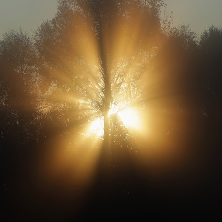sunshine background: autumn landscape sun rays through the trees in the fog in the oak grove Stock Photo