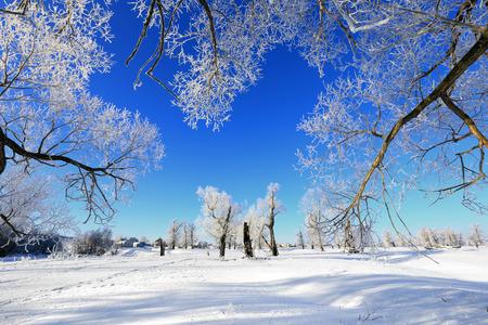 風景: 日当たりの良い凍りつくような朝の冬風景霜オークス
