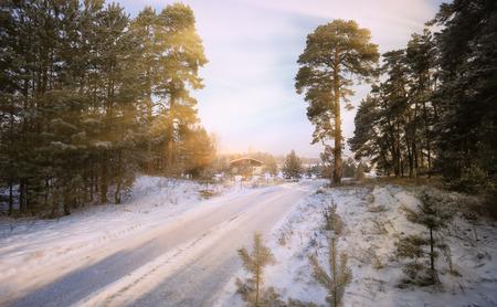 松林の中の木の霜枝を介して太陽の光線の冬の風景 写真素材