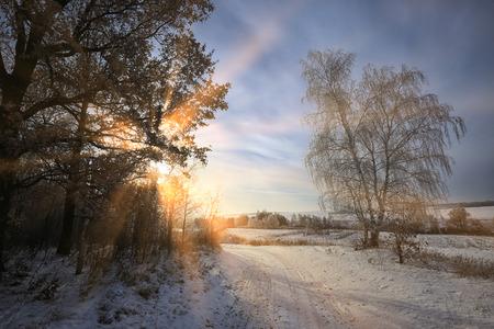 winterlandschap van de stralen van de zon door de berijpte takken van de bomen in het bos Stockfoto