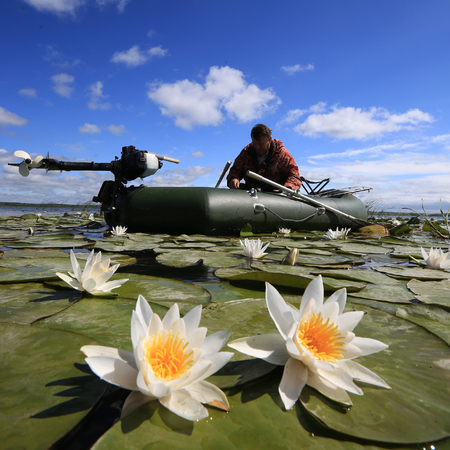 Summer landscape of a fisherman in a boat on the lake with white lilies Stockfoto