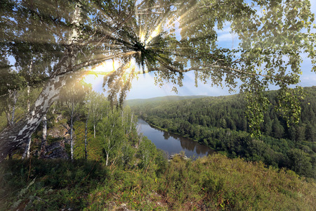 ural: beautiful summer landscape birch grove in the Urals on a clear sunny day