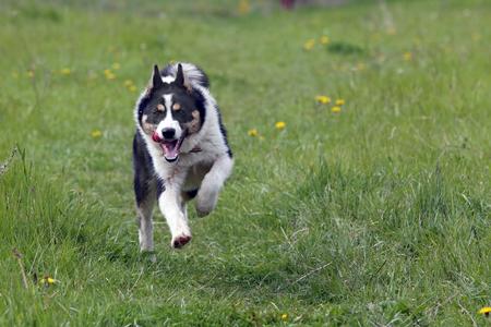 Close-upportret van een vrolijke hond op een groen gazon op een zonnige dag Stockfoto