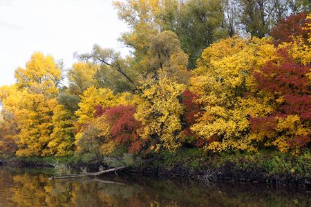 Panoramiczny krajobraz z rzeką i jesiennym lasem na wysokim brzegu.