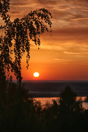 In the evening, see the red sun beside the shade of trees.