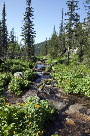mountain small river landscape photo