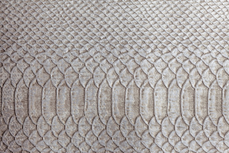 reptile: rich texture reptile skin smooth background