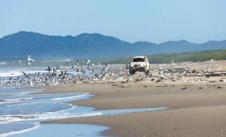 car accelerates flock of seagulls on the beach Banco de Imagens