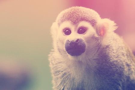 a large portrait of the monkey Stok Fotoğraf