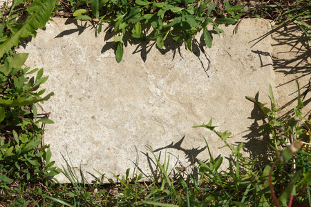 Green grass framing a rock Stok Fotoğraf