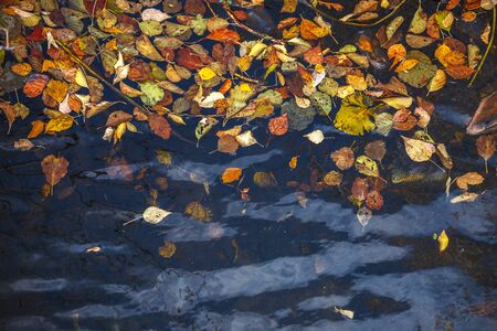 Autumn yellow-red leaves lie on dark water. Cool-background texture