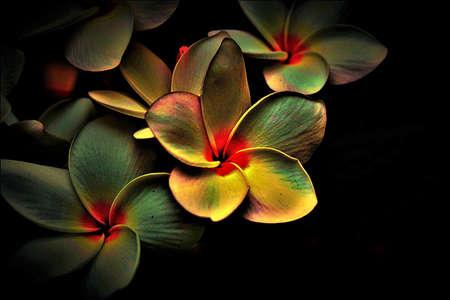 very beautiful landscape of flowers in darkness Foto de archivo