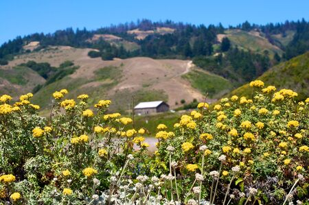 far off: An old barn far off in the distance, cradled by a patch of yellow flowers.
