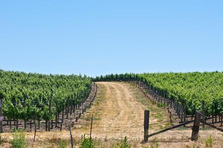 A local vineyard on a beautiful day in Napa, California. photo