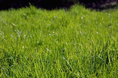 non urban: Bright fresh green grass with ground level viewpoint and shallow depth of field
