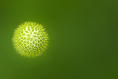 High resolution macro image of Virus. Close-up image of an organic cell on green background. A xray of bio element like a virus. Stock Photo