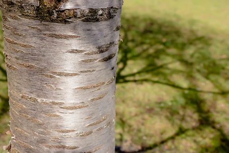Green park. Tree in the park at Spring.