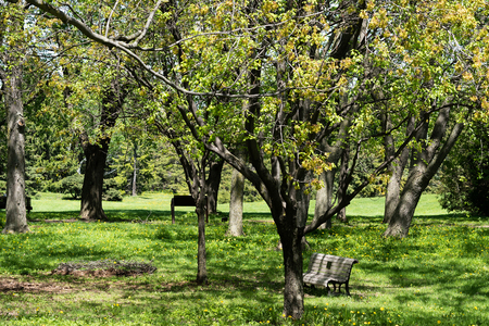 City park. Spring Nature. Beautiful Landscape. Park with Green Grass and Trees
