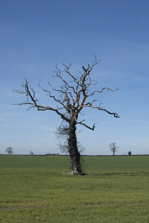 Tree in Shropshire field 写真素材