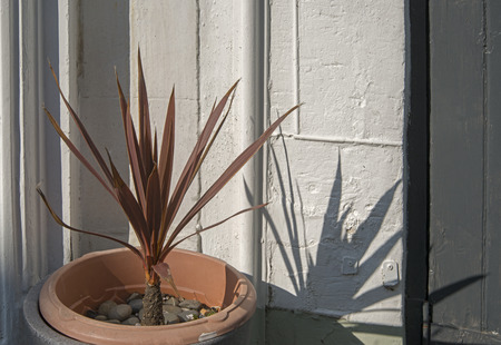 Phormium with shadow 写真素材
