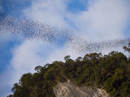 Swarm of bats leaving the caves in Gunung Mulu National Park, Borneo, Malaysia Reklamní fotografie