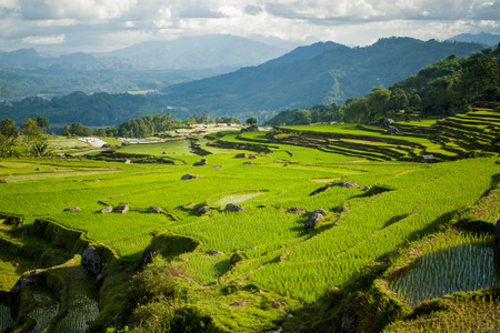 celebes: Landscape with the rice paddies in Tana Toraja, Sulawesi, Indonesia Stock Photo