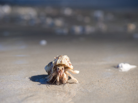Hermit crab in Sirinat National Park, Phuket, Thailand Stock Photo