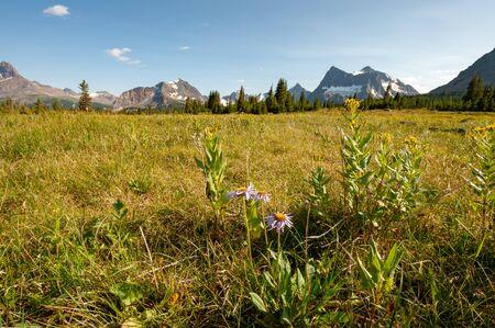 Meadow in Jasper national park, Alberta, Canada