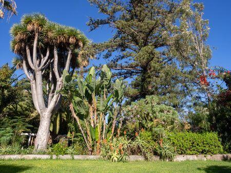 Tropical garden in Puero de la Cruz, Tenerife, Canary islands, Spain Reklamní fotografie