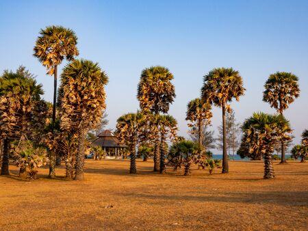 Palm trees in Mu Ko Lanta National Park, Thailand