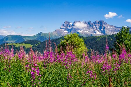 Chablais Alps with Dents Blanches mountain in the background,  Switzerland Reklamní fotografie