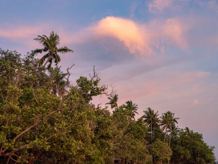 Trees on a beach in Krabi, Thailand