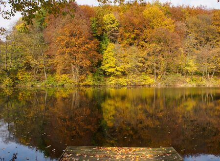 Autumn at a fish pond in Carpathian forest