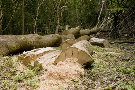 Logs and tree trunk after precipitation
