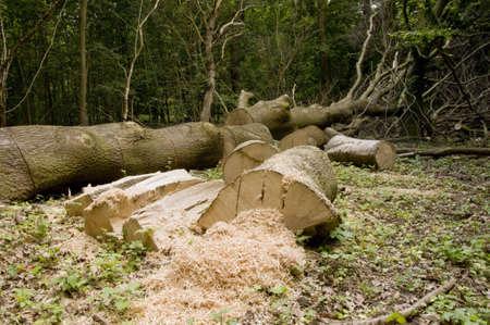 precipitaci�n: Registros y tronco de �rbol despu�s de la precipitaci�n