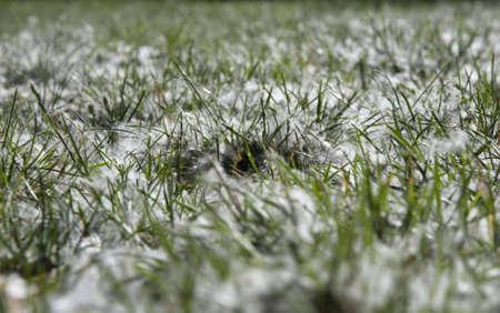 pollen in a lawn