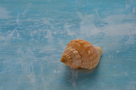Isolated seashell in blue background