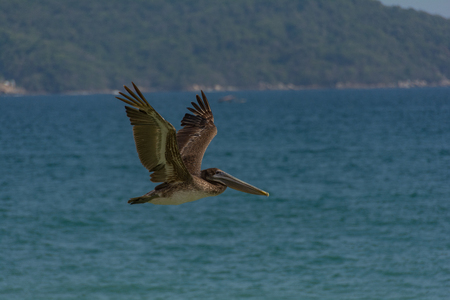 Pelican flying over the sea