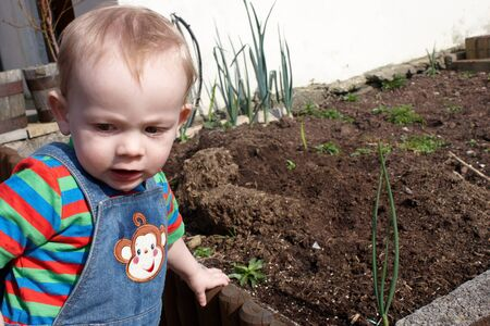 Little boy by the veg patch in the garden Stock Photo - 13490224
