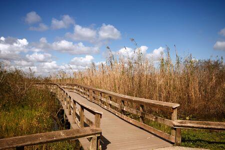 brige: A wooden bridge through the Everglades in Florida