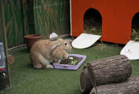 enclosures: A brown rabbit sitting by his food