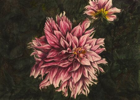detailed and realistic watercolor depicting bright pink dahlias