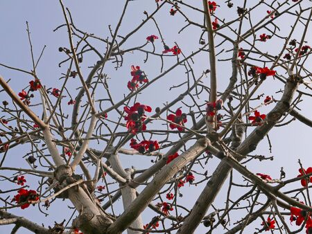 few red flowers on tree branches Stok Fotoğraf