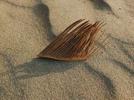 scenic and minimalist image of a leaf on the sand 版權商用圖片