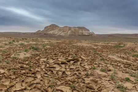 Land cracked from the heat. The Ustyurt Plateau. District of Boszhir. The bottom of a dry ocean Tethys. Kazakhstan