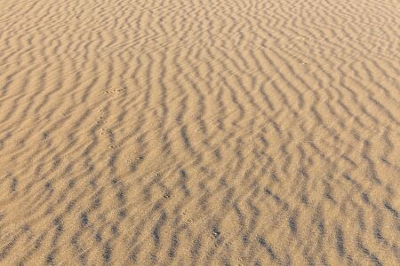 Sand texture. Sandy beach for background. Top view. selective focus 版權商用圖片